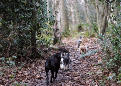 Dogs Walking in Tooting Woods